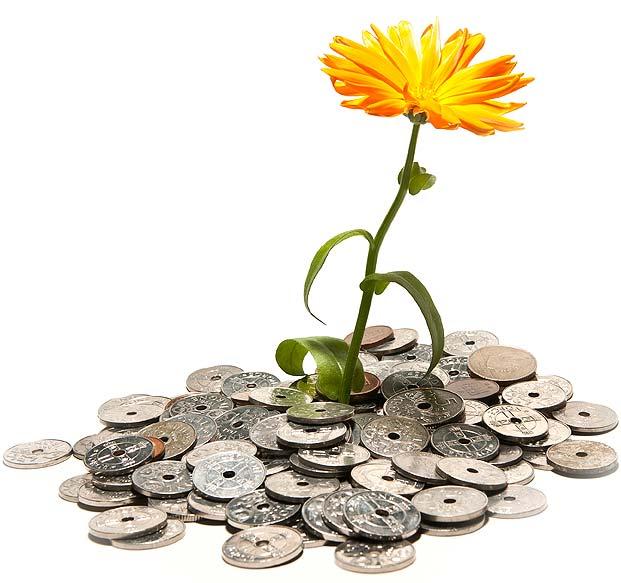 blomst-penger_fs